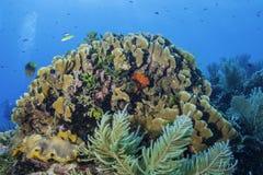 Коралл огня лезвия стоковая фотография