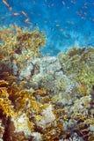 Коралл огня трудный Стоковое фото RF
