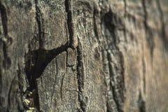 Кора пальм стоковые фотографии rf