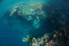 коралл падает риф Стоковое Изображение RF