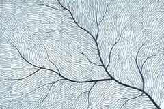 Коралл помещенный на белой кирпичной стене Стоковые Изображения RF