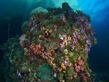 Коралл пузыря и мягкое cora Стоковое Изображение