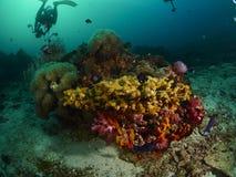 Коралл пузыря и мягкое cora Стоковое Изображение RF