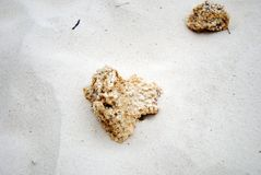 Коралл пляжа песка Стоковые Фотографии RF
