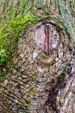 Кора ствола дерева формирует уникальную текстуру стоковая фотография rf