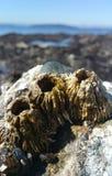 Коралл с предпосылкой океана Стоковые Фото