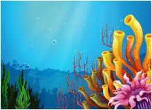 Кораллы под морем бесплатная иллюстрация