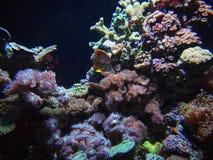 Кораллы Стоковое фото RF