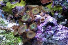 коралл Стоковые Изображения