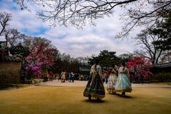 Корейские девушки с традиционными одеждами стоковая фотография rf