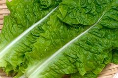 Корейский Салат-Lactuca sativa Стоковые Изображения