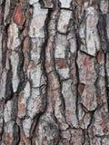 Коренастая треснутая и текстурированная кора на старом дереве стоковые фото