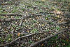 Корень дерева в саде Стоковые Фото