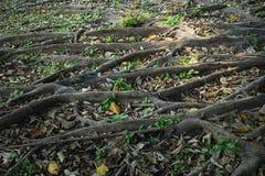 Корень дерева в саде Стоковые Изображения