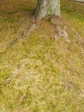 Корень дерева на саде Стоковые Фотографии RF