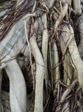 Корень дерева Стоковая Фотография RF