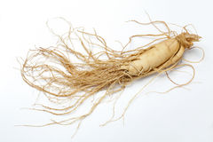 корень женьшени   Стоковые Фотографии RF