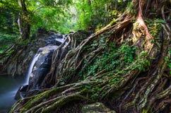 Корень и водопад стоковое изображение rf