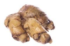 корень макроса cekor изолированный перстом стоковое изображение rf