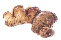 корень макроса cekor изолированный перстом стоковое фото rf