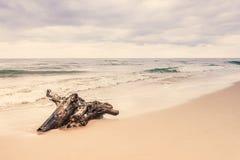 Корень на береге моря, ландшафт дерева природы Стоковое фото RF