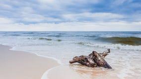 Корень на береге моря, ландшафт дерева природы Стоковая Фотография RF