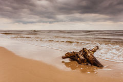 Корень на береге моря, ландшафт дерева природы Стоковая Фотография