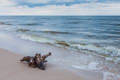 Корень на береге моря, ландшафт дерева природы Стоковое Фото