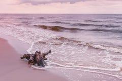Корень на береге моря, ландшафт дерева природы Стоковые Изображения