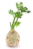 корень сельдерея свежий Стоковое Изображение RF