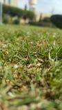 Корень травы Стоковые Изображения