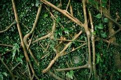 корень Стоковая Фотография RF