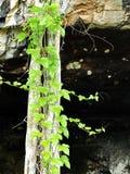 корень Стоковые Изображения RF