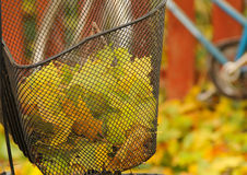 Корзина велосипеда с цветастыми листьями осени Стоковое Фото