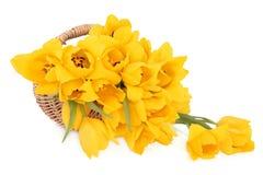 Корзина весны Стоковая Фотография