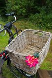 Корзина велосипеда Reed Стоковое Изображение RF