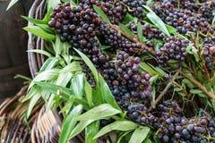 Корзина виноградин Стоковая Фотография RF