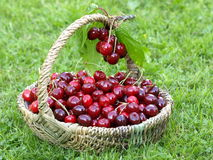 Корзина вишни Стоковое Фото