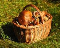 Корзина вполне грибов. Стоковое Изображение RF