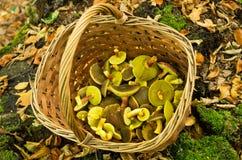 Корзина вполне грибов Стоковые Фотографии RF