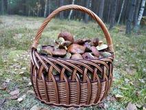 Корзина вполне грибов леса Стоковые Изображения