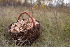 Корзина вполне грибов стоя в траве Стоковые Изображения
