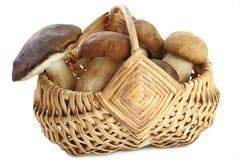 Корзина вполне грибов Стоковая Фотография