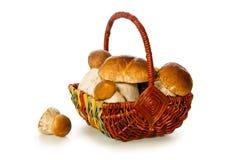 Корзина вполне изолированных грибов porcini Стоковая Фотография RF