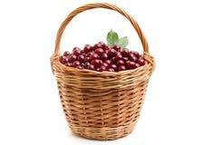 Корзина вполне свежей красной вишни на белой предпосылке Стоковые Фотографии RF