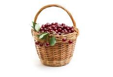 Корзина вполне свежей красной вишни на белой предпосылке Стоковая Фотография RF