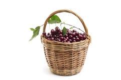 Корзина вполне свежей красной вишни на белой предпосылке Стоковое Изображение RF