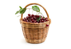 Корзина вполне свежей красной вишни на белой предпосылке Стоковые Изображения RF