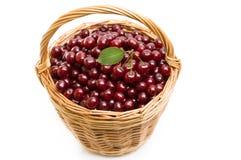 Корзина вполне свежей красной вишни на белой предпосылке Стоковое Фото