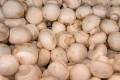 Корзина вполне свежих белых грибов нашла в продовольственном рынке Стоковые Фото
